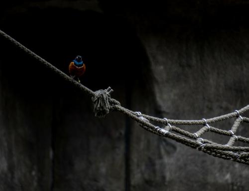 Na czym polega tajemniczość Deep i Dark Webu?